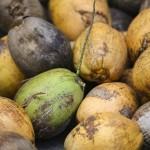 Najpopularniejsze zastosowania oleju kokosowego: uroda.