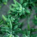 Szybka porada: chińskie zioła w walce z lękami i niepokojem.